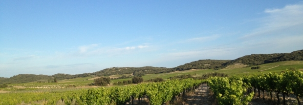 cropped-tavel-vignes.jpg